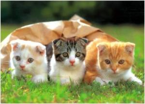 Gambar Ilustrasi Tema Hewan Kesayangan Kucing Ternyata Memelihara Hewan Kesayangan Membuat Kita Sehat Dan Happy Kompasiana Com